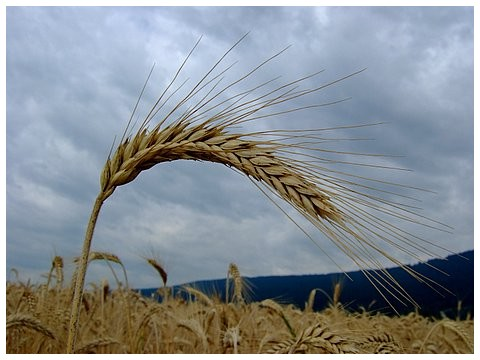 trading produits agricoles
