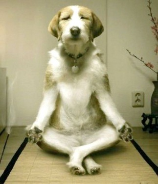 yoga trader yoga trading